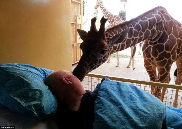 goodbye-giraffe