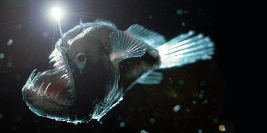 ocean-melysege-19