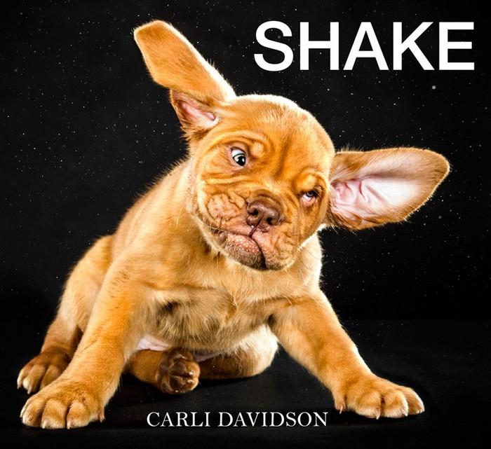 shake-kutyak-11