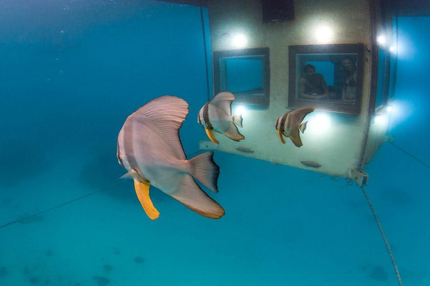 viz-alatti-paradicsom-6