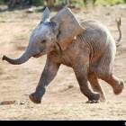 baba-elefant-ormany