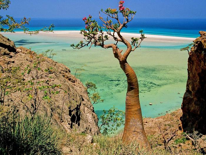furcsa-novenyek-szigete-1