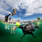 viz-alatti-kutyak-10