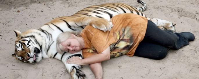 bengali-tigrisek-001