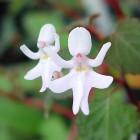 kulonleges-orchideak-011