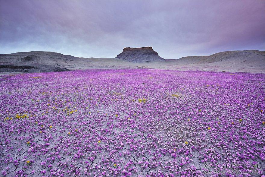 viragba-borult-sivatagok-001