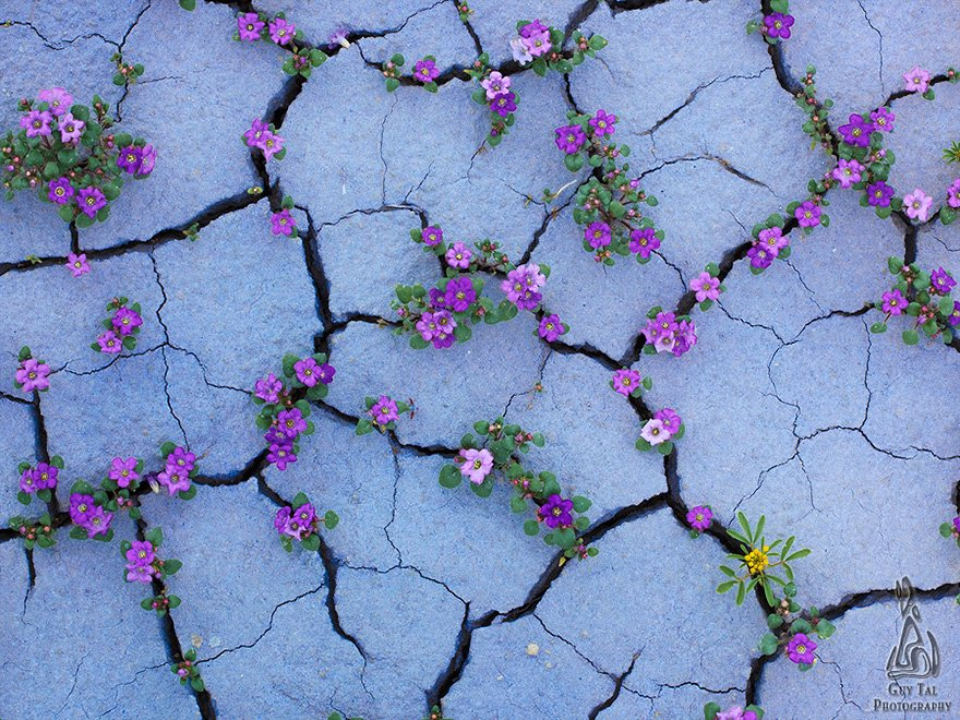 viragba-borult-sivatagok-005