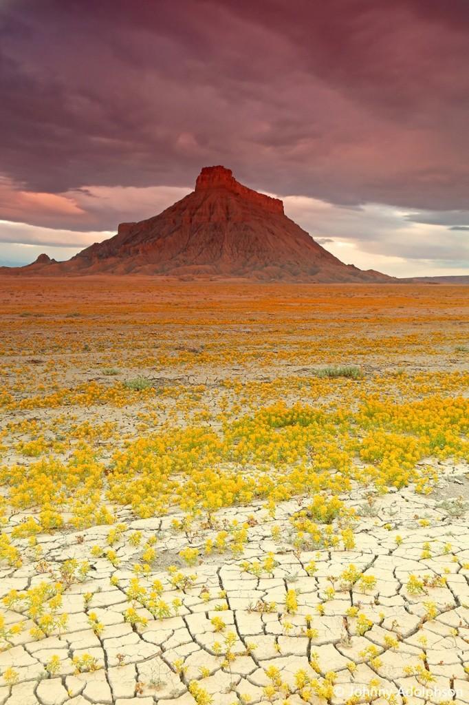 viragba-borult-sivatagok-011
