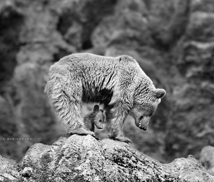 nagy-macik-kis-macik-013