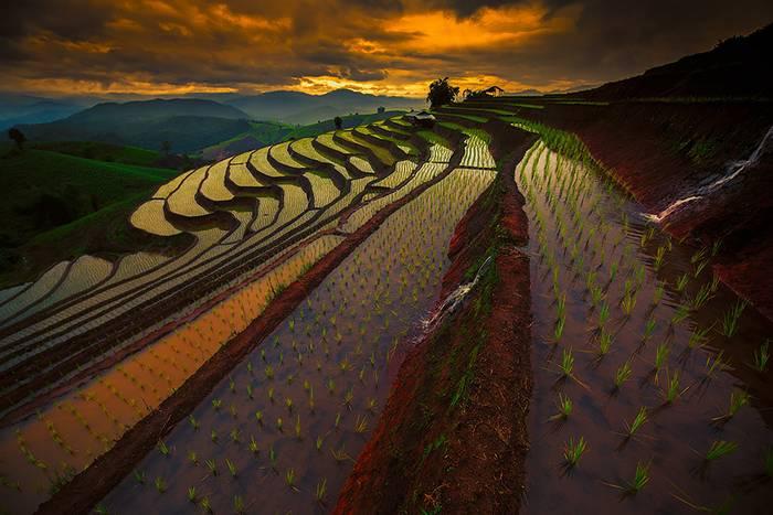 kaprazatos-rizsfoldek-004