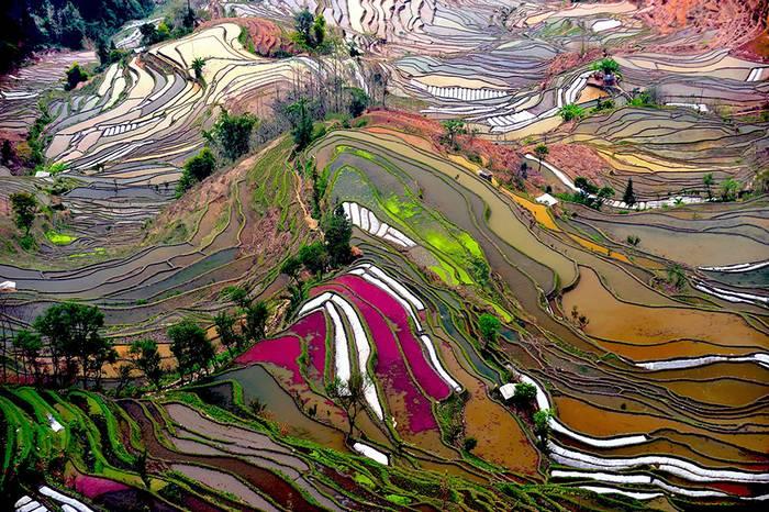 kaprazatos-rizsfoldek-005