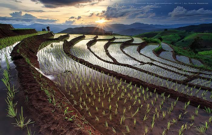 kaprazatos-rizsfoldek-022