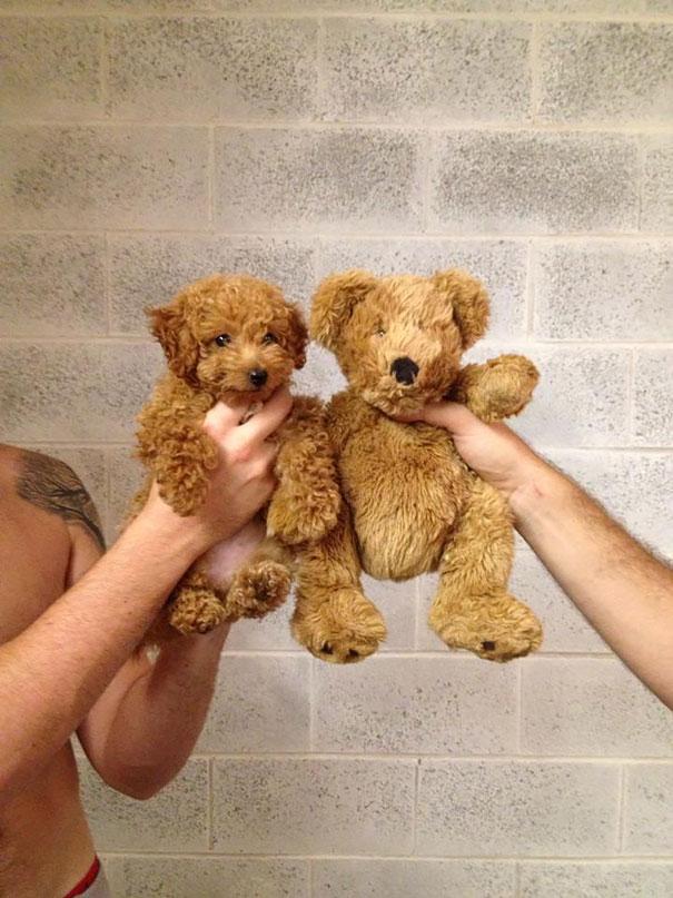 pufok-kutyusok-005