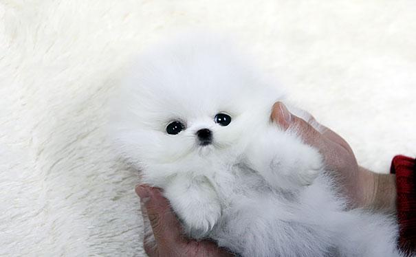 pufok-kutyusok-007