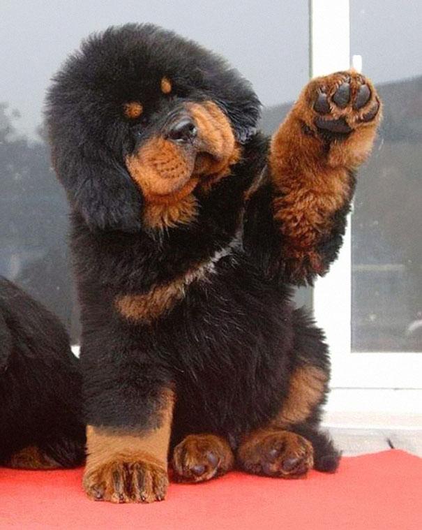 pufok-kutyusok-010
