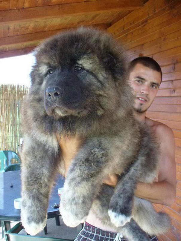 pufok-kutyusok-012