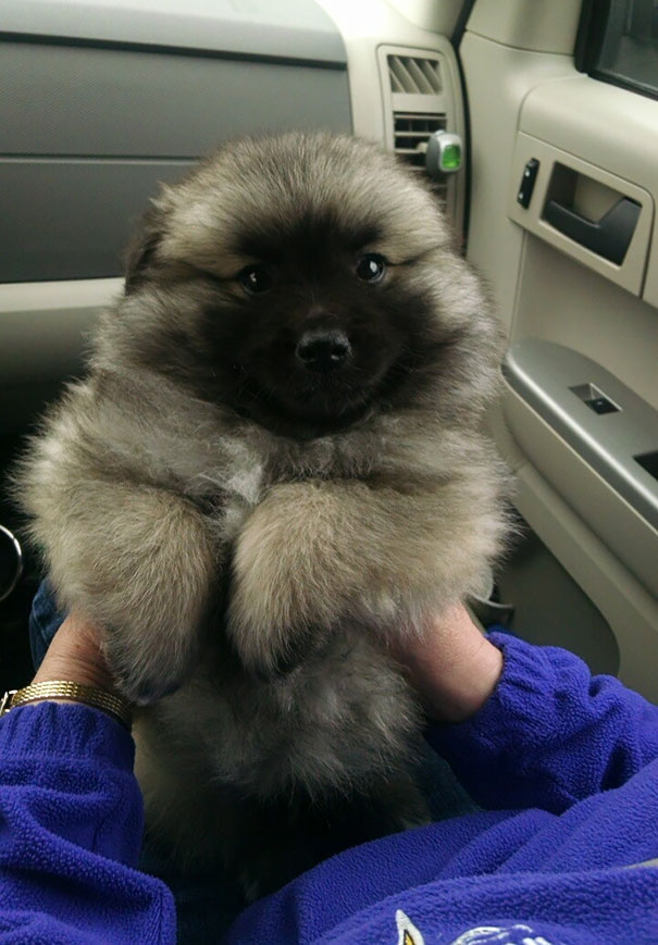 pufok-kutyusok-013