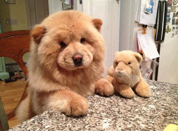pufok-kutyusok-014