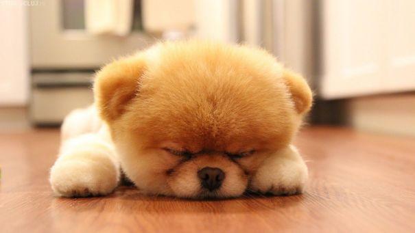 pufok-kutyusok-019