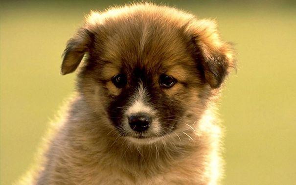 pufok-kutyusok-022
