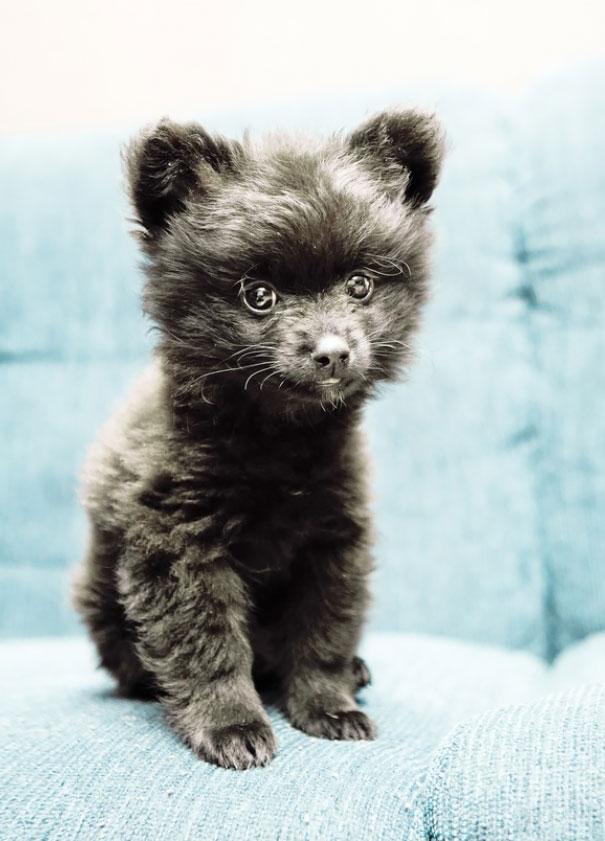 pufok-kutyusok-026