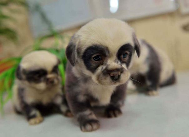 pufok-kutyusok-027