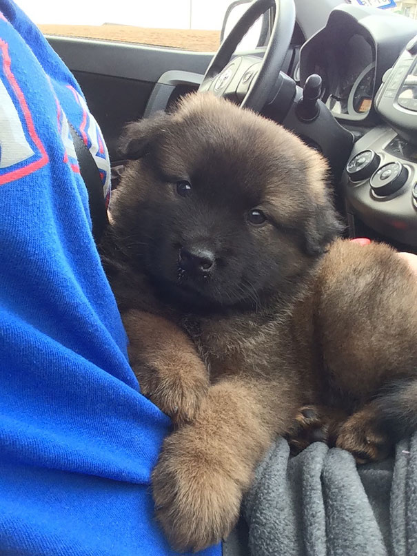 pufok-kutyusok-029