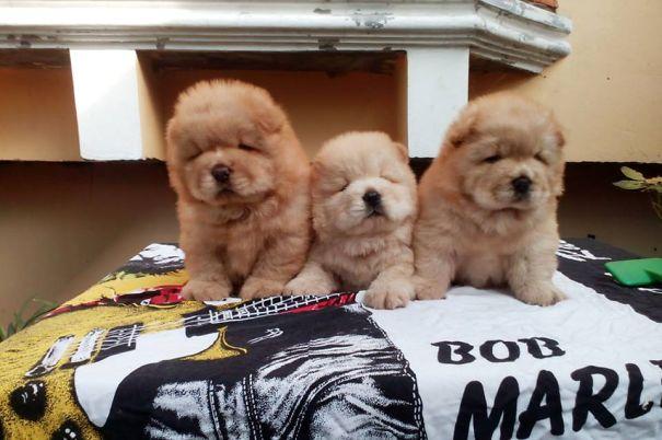 pufok-kutyusok-032
