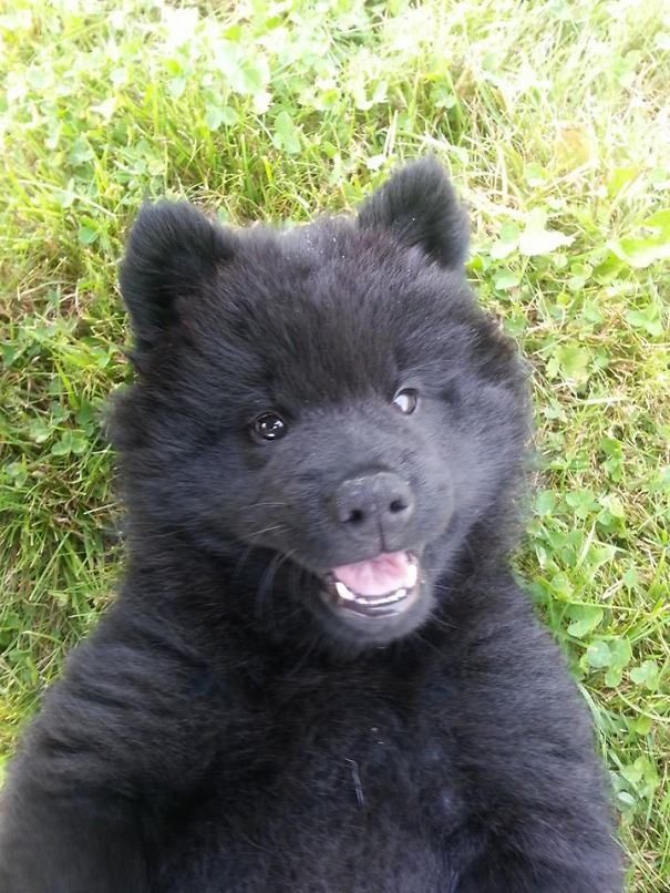 pufok-kutyusok-035