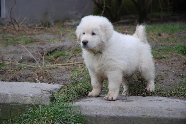 pufok-kutyusok-040