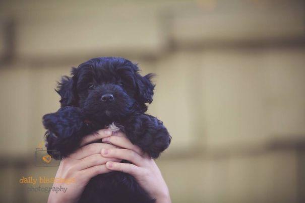 pufok-kutyusok-046