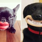 funny-dog-toys-coverimage