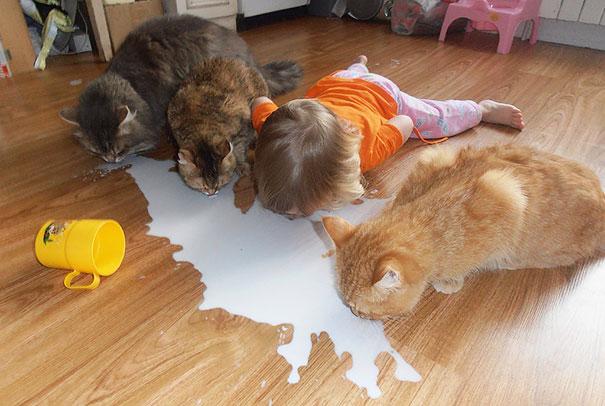 gyerekek-macskak-004